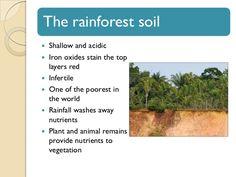 Rainforest Biome, Biomes, Habitats, Montessori, World, Plants, The World, Plant, Planets