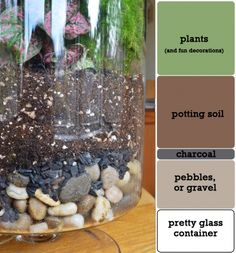 DIY succulent terrarium - layer rocks, charcoal, and potting soil, and top it with plants!