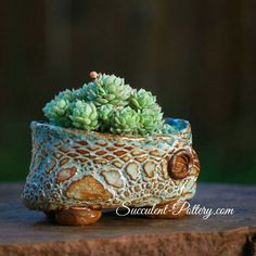 Love this pot!