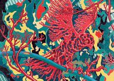 Coral Bird (Schema)