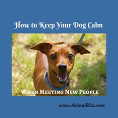 3 Ways to Keep Your Dog Calm When Meeting New People Puppy Find, New Puppy, Living With Dogs, Cute Dog Photos, Puppy Training Tips, Best Puppies, Dog Safety, Dog Boarding, Working Dogs