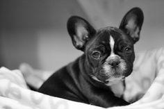 Varasto-koira Tytti