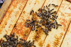 Bez včiel by chýbalo ovocie a zelenina, ale aj koreniny a oleje. Ako chrániť opeľovače? - Akčné ženy Ale, Bread, Food, Ale Beer, Brot, Essen, Baking, Meals, Breads