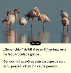 Giza, Flamingo, Fun Facts, Animals, Flamingo Bird, Animales, Animaux, Flamingos, Animal