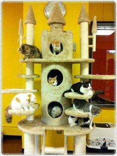Cat tree of castle d Cat Castle, Cat Climber, Tom Y Jerry, Diy Cat Tree, Cat Towers, Cat Playground, Cat Enclosure, Cat Condo, Pet Furniture