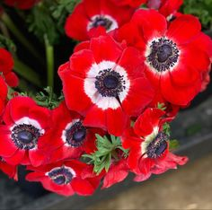 Red Anemone, Anemone Flower, Cream Flowers, Cream Roses, Lavender Roses, Pink Roses, Wedding Bouquets, Wedding Flowers, Bulk Flowers Online
