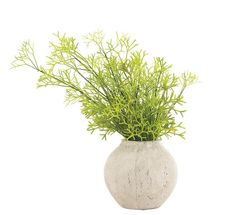 Natural Decorations, Inc. - Coral Cactus Ceramic Olive Jar