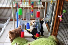 AnnaBlog!: I have been creating an 'Adventure Box' for the pups.