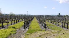 Wine Tasting in Sonoma, California, USA