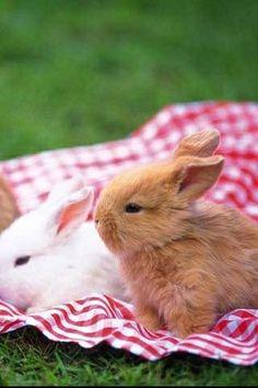 Bunnies #SimplyBeSpringPin