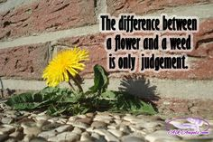 The difference between a flower and a weed is only judgement.  #flower #weed #judgement #askangels