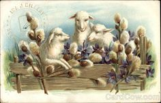 Three Lambs with Flowers-old postcard