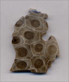 Petoskey stone Michigan