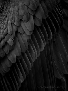 He has the standard raven wings that all Reapers have. They are retractable. Black And White Photo Wall, Les Fables, Yennefer Of Vengerberg, Angel Aesthetic, Gothic Aesthetic, Black Wings, Black Feathers, Bird Feathers, Angels And Demons