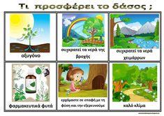 Ζήση Ανθή : Εποπτικό υλικό για το δάσος στο νηπιαγωγείο .    Τι μας προσφέρει το δάσος ;         Το δάσος είναι πηγή οξυγόνου , συγκρατεί ... Forest Theme, Environmental Education, Holidays And Events, Trees To Plant, Kindergarten, Activities, School, Plants, Greek