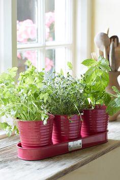 Raspberry Herb Pots