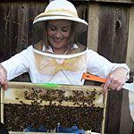 Guide to backyard beekeeping