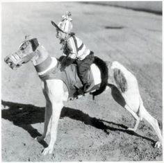 "Circa 1930, capuchin monkeys trained as greyhound ""jockeys."""