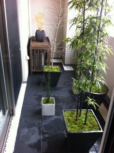 Japanese Spot Garden On Apartment Balcony