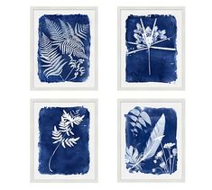 Cyanotype Framed Prints #potterybarn