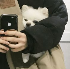 The traits we all like about the Small Pomeranian Puppies Everything About Inquisitive Pomeranian Dogs Cute Puppies, Cute Dogs, Dogs And Puppies, Cute Babies, Doggies, Like Animals, Animals And Pets, Baby Animals, Shiba Inu