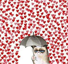 #grumpy #cat #hearts #umbrella