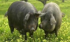 Escapadas gastronómicas: Andalucía en ocho bocados Hippopotamus, Elopements, Finger Foods, Life