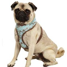 Owl-le-lujah! Our Zack & Zoey Hoot and Howl Dog Harness offers comfort, control, and a completely cool owl-inspired pattern. Each harness is fully adjustable and has a nickel-plated D-ring for easy leash attachment. Made of 100% Polyester. Machine wash in cold water on gentle cycle. Line dry. Pair it with one our matching leashes, or Hoot and Howl products.
