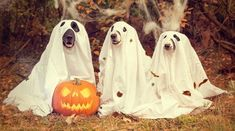 ►► 10 Quick, Fun, LAST MINUTE and FREE Halloween Costume Ideas You Can Make With Items In Your House ►► #CostumeIdea, #Free, #Halloween, #Halloween2021, #HappyHalloween ►► Freebie Depot Best Dog Halloween Costumes, Halloween Captions, Chien Halloween, Fröhliches Halloween, Feliz Halloween, Ghost Costumes, Halloween Images, Halloween Pumpkins, Halloween Decorations