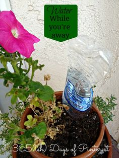 Vol. 2, Day 11: How to Water Plants While on Vacation - 365ish Days of Pinterest