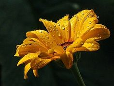 Raindrops, Daisy, Drops, Dew, Water