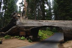 "Place to Visit: Sequoia and Kings Canyon National Parks ""Tunnel Log, Sequoia National Park"" Sequoia National Park, National Parks Usa, National Forest, Oh The Places You'll Go, Places To Travel, Places To Visit, Travel Destinations, Dream Vacations, Vacation Spots"