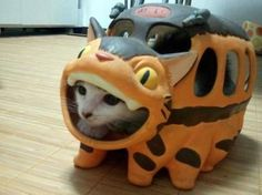 This cat looks really unhappy but holy cat, it's a cat in a Catbus! #totoro