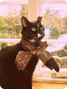 A cat in a Liberty scarf
