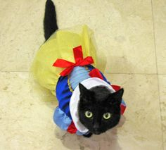 Funny Cats On Halloween Costumes hey if you love your cat and you wish to make sure that they are happy and healthy then you wish to see to it you use the very best product go to this website right here for natural animal items