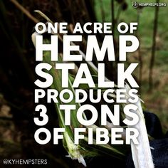 #Hemp produces 2-3 times more fiber per acre than cotton. Hemp is much easier to grow leading to much less or no chemical use. It also uses nearly a third of the water that cotton needs. Hemp is just a more durable and sustainable fabric. Make Hemp part of your everyday.   Use HEMP10 for 10% off!