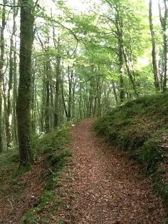 Bards In The Woods: Mullaghmeen of Many Paths