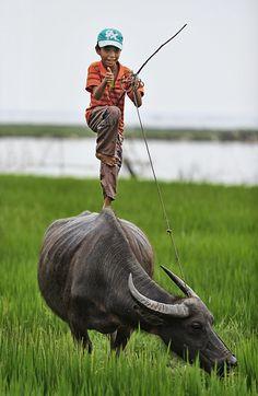 Buffalo Boy in Vietnam Religions Du Monde, Cultures Du Monde, World Cultures, Kids Around The World, We Are The World, People Around The World, Image Emotion, Water Buffalo, Indochine