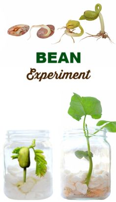 Experiment for kids- grow a magic beanstalk. Great early gardening activity for preschool and elementary ages! Coping Skills Activities, School Age Activities, Rainbow Activities, Fun Indoor Activities, Educational Activities For Kids, Spring Activities, Preschool Activities, Nature Activities, Rainbow Crafts