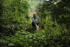 Organic farmer Jane Wynne tours her ecological preserve in Kenscoff, Haiti.
