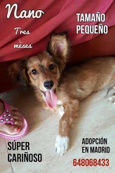 SandRamirez contra el maltrato animal. • www.luchandoporellos.es: NANO.