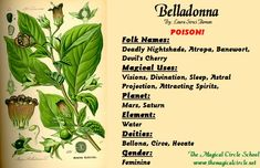 Belladonna Magical Properties - The Magical Circle School - www.themagicalcircle.net