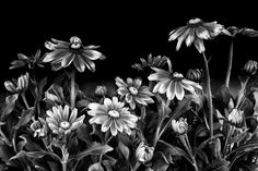 EARLY FALL - Fine Art Photography Print 12 X 18 Inch Floral in Black and White. Title: EARLY FALL - a black and white contemporary garden floral with digital enhancements printed on matte watercolor paper ideal for home decor / wall art. Print does not include mat or frame.