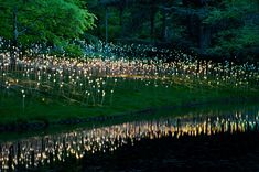 Light: installations by Bruce Munro at Longwood Gardens