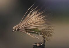 Because caddisflies tend to emerge very quickly, trout don't want to expend too much energy chasing them. Instead, the fish focus on those emergers that are crippled or are struggling to escape the nymphal shuck. The X-Caddis, developed by. . .Read More  »