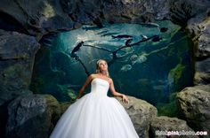 Christine & Brandon – Florida Aquarium Wedding