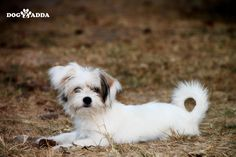 Dogzadda is a pet shop to find puppies, Dogs for sale in India. We have the best pet products & pet services like grooming and more services in Hyderabad. Dog Photos, Dog Pictures, Best Funny Pictures, Best Dog Food, Best Dogs, Dog Ages, Dogs For Sale, Letting Go Of Him, Free Dogs