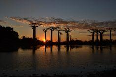 Allée des baobabs. Madagascar. 2014.