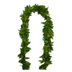 Maile Lei for my groom - its leaves are believed to protect the wearer, bestow good luck and possess healing powers