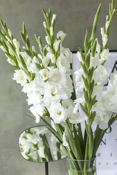 Gladiolus, Flowers, Plants, Decorations, Nature, Dekoration, Plant, Royal Icing Flowers, Ornaments